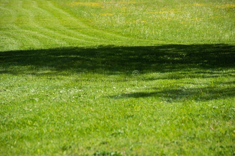 Tiras de hierba segada igual imagen de archivo libre de regalías