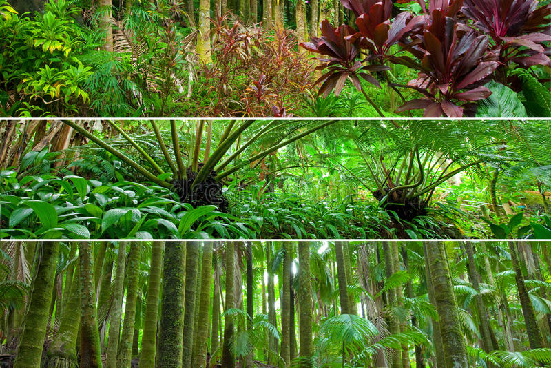 Tiras do panorama da combinação da variedade da floresta húmida fotografia de stock royalty free