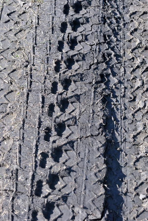 Tire marks on wet ground, vertical background texture royalty free stock images