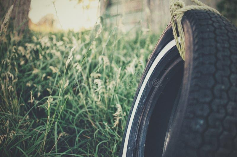 Tire swing stock image