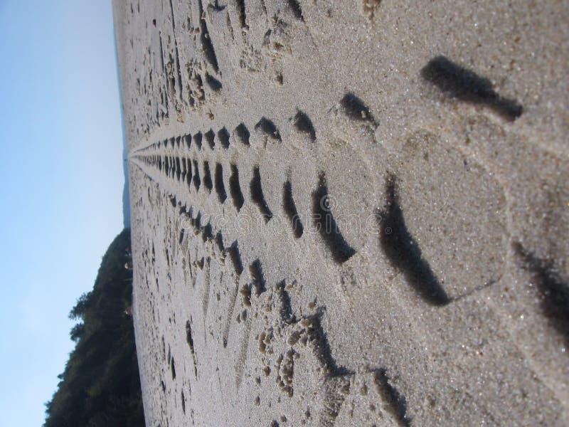 Tire tracks on a beach stock image