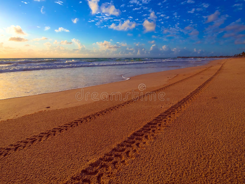 Tire tracks on the beach royalty free stock image