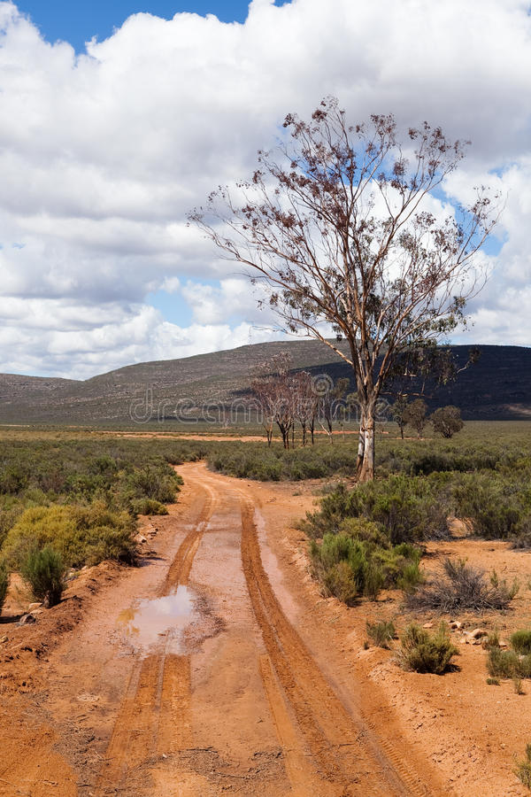Download Tire tracks on dirt road stock photo. Image of tire, african - 20669496