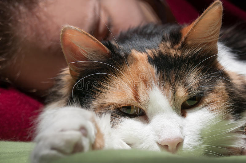 Tired cat look. Sleeping with the cat in bed royalty free stock photos