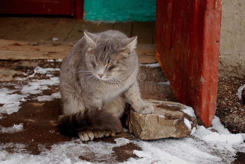 A tired cat. On the porch in spring, lost in thought stock photography