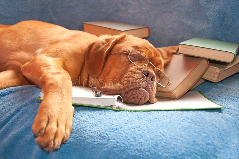 Tired dog asleep stock photography