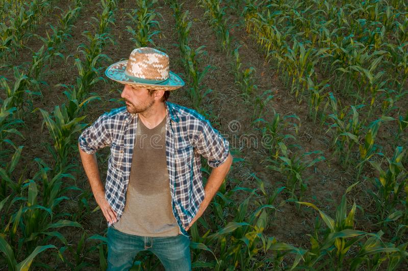 Tired exhausted farmer standing in cultivated sorghum field stock photos