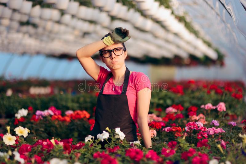 Woman Suffering Injuries While Working in Floral Greenhouse royalty free stock image
