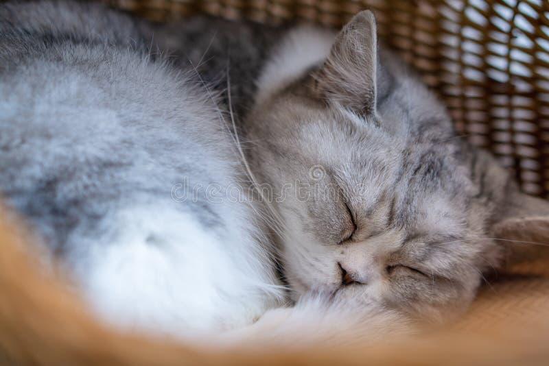 Tired gray cat sleeping in wicker basket stock photos