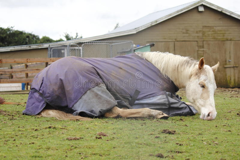 Tired Horse, Resting. A tired horse wearing a protective jacket, rests in a field royalty free stock image