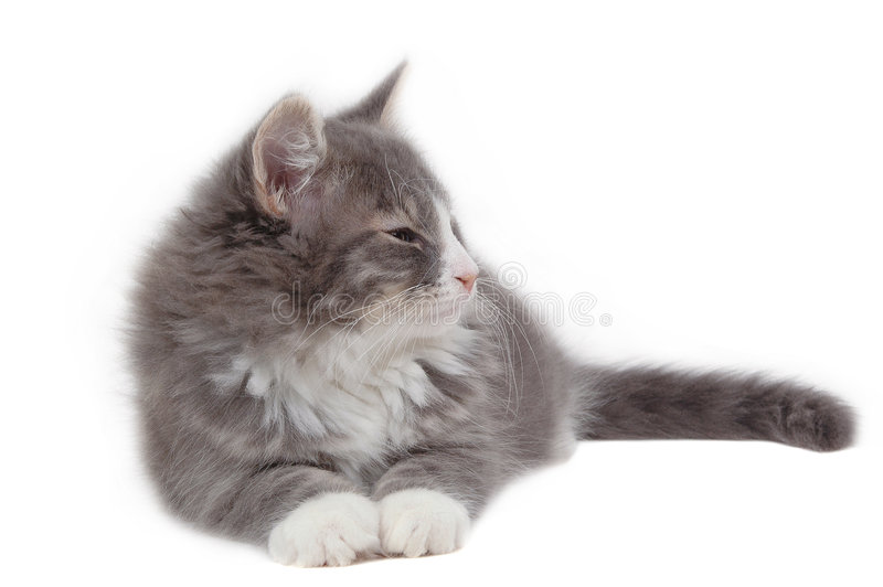 Tired kitten. Close-up stock photography