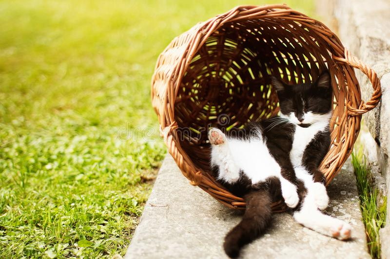Tired kitten sleeping in shadow, resting on its back in funny position hidden in vintage vicker basket. During sunny day royalty free stock photos