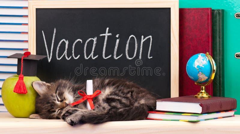 Tired little kitten stock photos