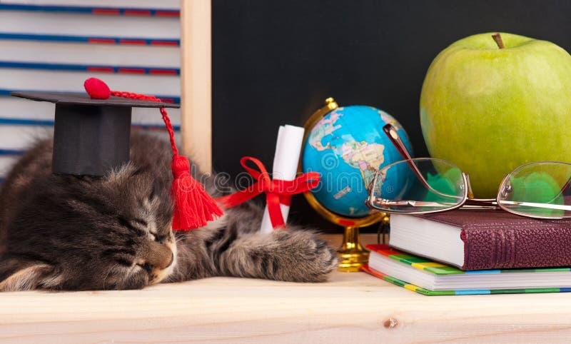Tired little kitten stock image