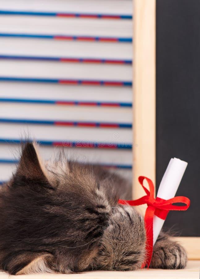 Tired little kitten royalty free stock photo