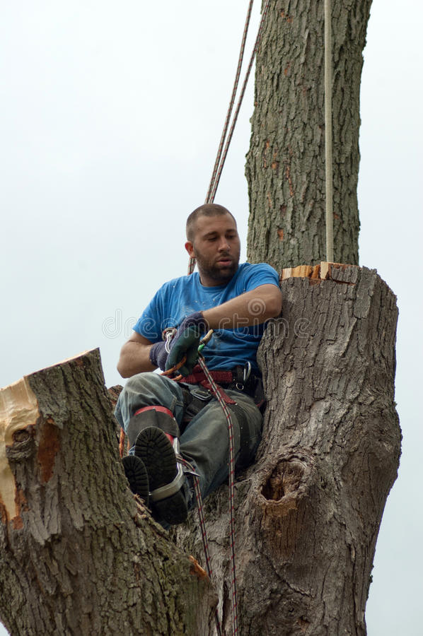 Download Tired Tree Worker Stock Image - Image: 21114561