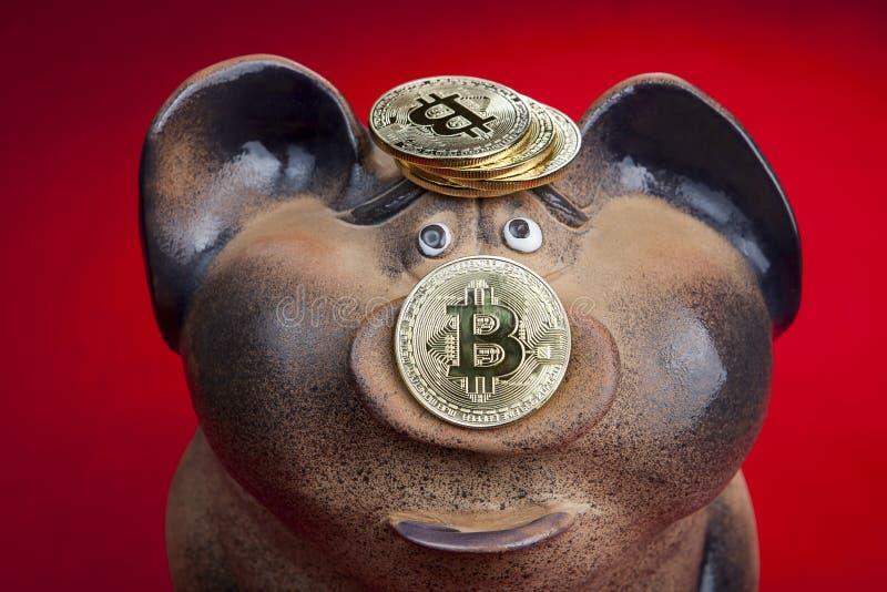 Tirelire avec le bitcoin de pièce d'or sur le porcelet de porc images libres de droits