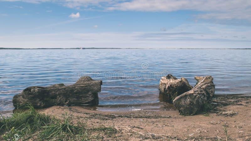 Tiri l'orizzonte in secco con i vecchi tronchi di albero in acqua - retro lo d'annata fotografie stock libere da diritti