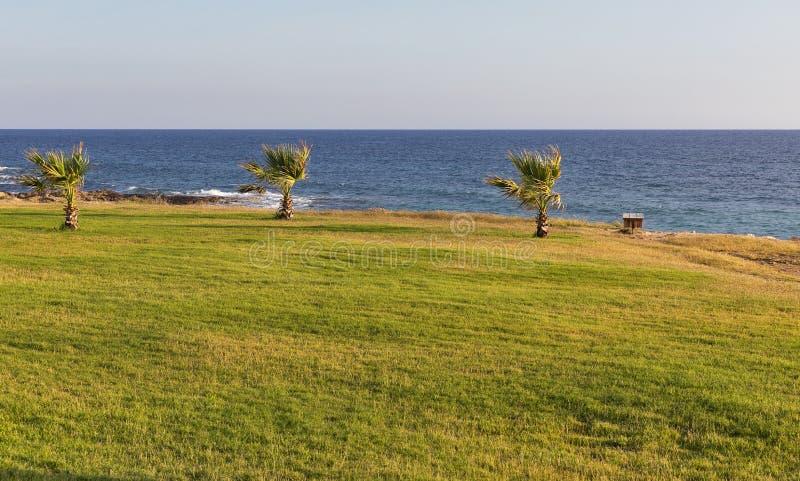Tiri la vista sul mare in secco con prato inglese e le palme verdi al tramonto immagini stock libere da diritti