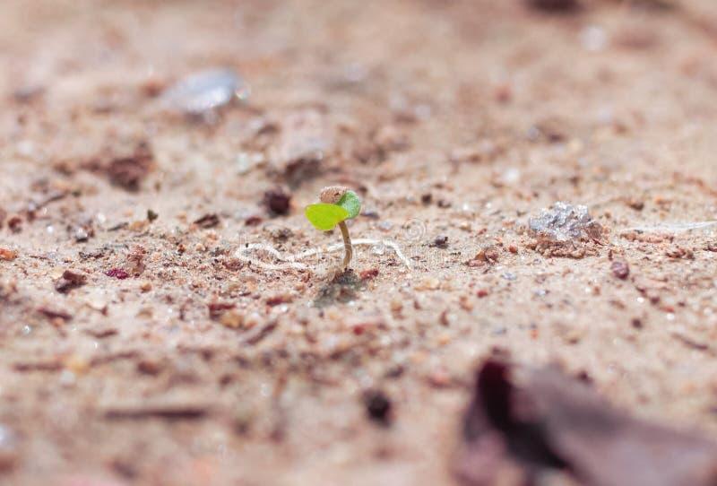 Tiri verdi nella sabbia, nella campagna di estate La sabbia sotto il sole caldo riflette la luce Piccoli tiri verdi, immagine stock libera da diritti