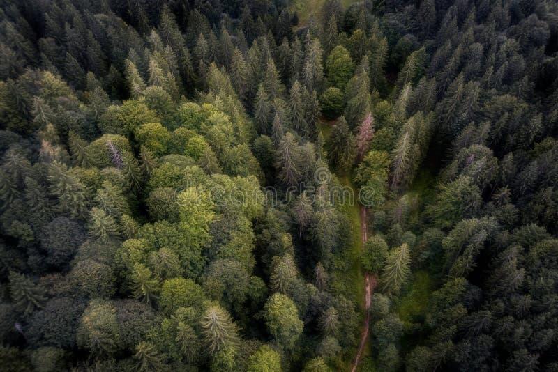 Tiro aéreo de uma estrada em uma floresta romena foto de stock
