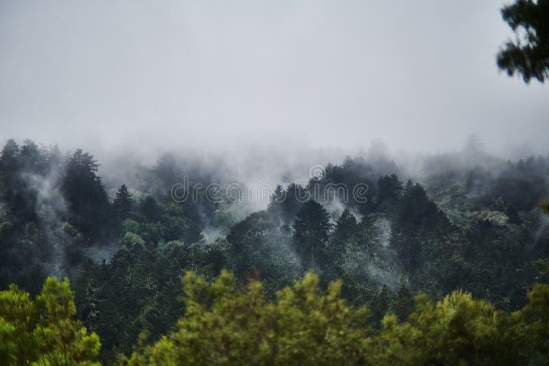 Tiro aéreo de uma floresta bonita cercada pela névoa e pela névoa excitantes naturais fotografia de stock royalty free