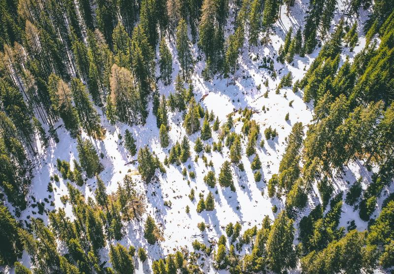 Tiro aéreo de un bosque nevoso hermoso con los árboles altos verdes en el invierno fotografía de archivo