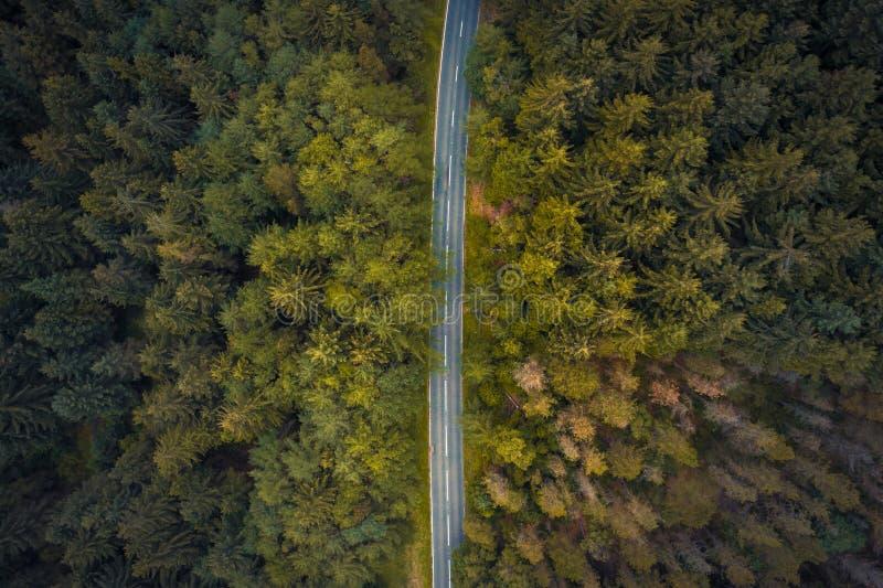Tiro aéreo surpreendente das árvores ao longo da passagem da serpente no parque nacional do distrito máximo, tiro em um verão de  fotos de stock royalty free