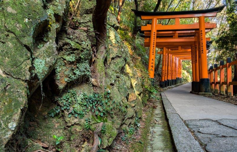 Tiro apretado de toriis de madera rojos en una trayectoria en templo del condado de Fushimi Inari con las rocas almizcladas verde foto de archivo libre de regalías