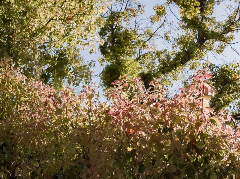 Tiro ascendente cercano de hojas recién nacidas en San Gabriel foto de archivo