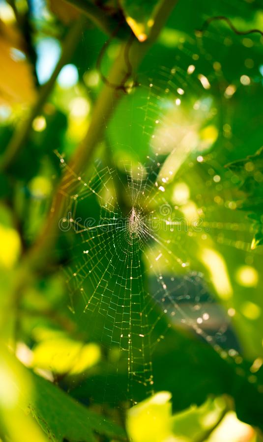 Tiro ascendente próximo do webin da aranha a luz solar no por do sol fotografia de stock royalty free