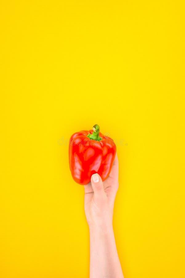 Tiro colhido da pessoa que guarda o pimento cru fresco da paprika fotografia de stock royalty free