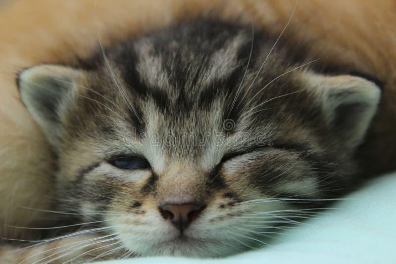 Tiro colhido de Tabby Kitten bonito imagem de stock royalty free