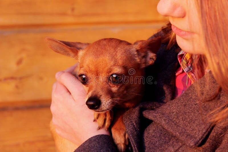 Tiro colhido de um proprietário e de um animal de estimação A moça que guarda um cão, fecha-se acima fotos de stock royalty free