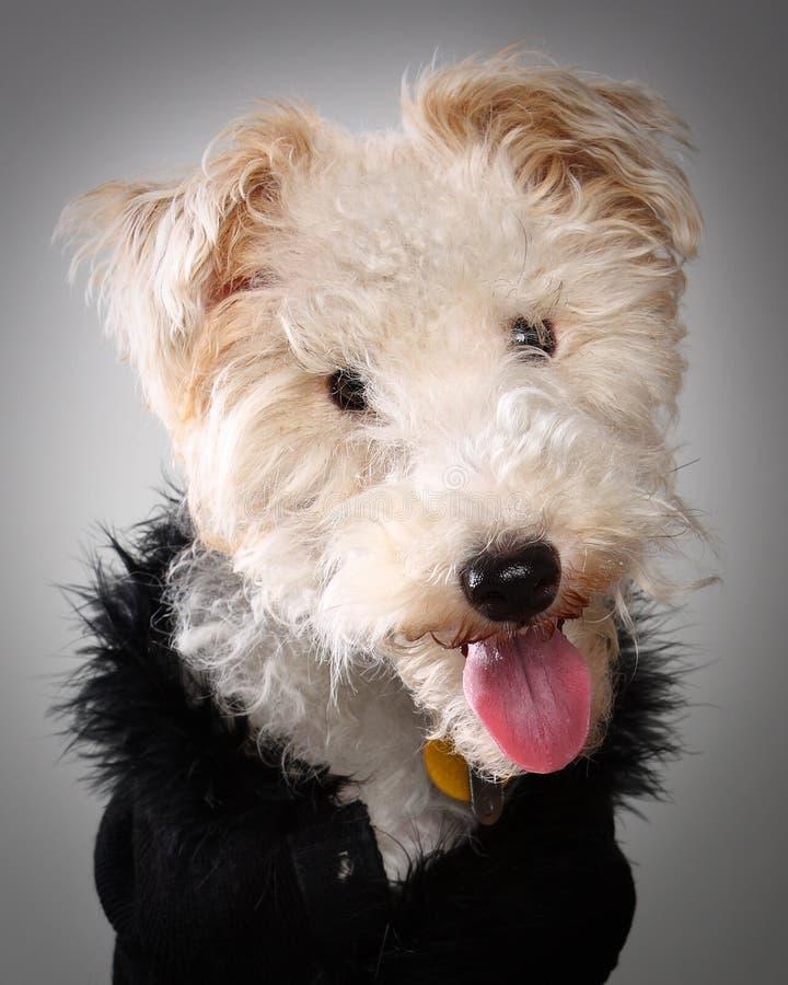 Tiro da cabeça do Doggy foto de stock royalty free