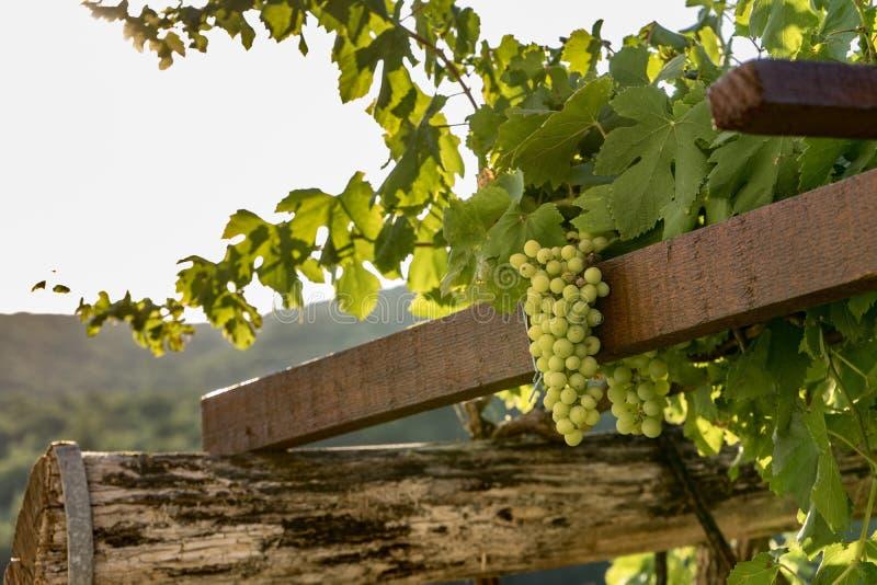 Tiro da jarda do vinho imagens de stock royalty free