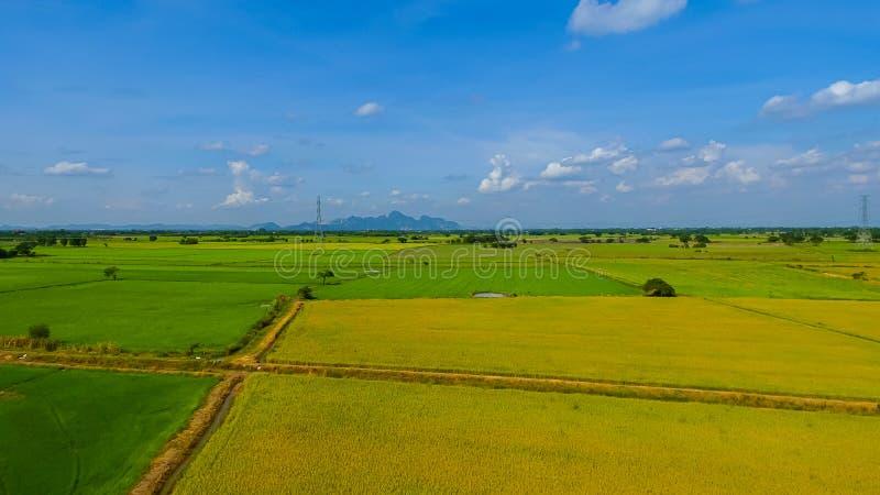Tiro da vista aérea do zangão dos campos de almofada bonitos com os brotos novos verdes em cultivar a colheita orgânica com arroz imagens de stock