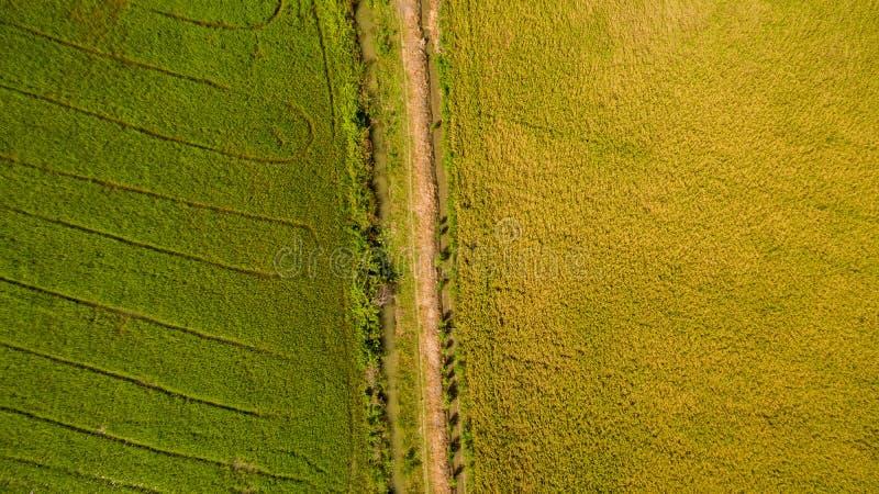 Tiro da vista aérea do zangão dos campos de almofada bonitos com os brotos novos verdes em cultivar a colheita orgânica com arroz imagens de stock royalty free