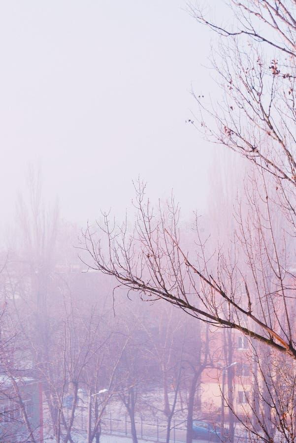 Tiro de la gama larga del abedul y de árboles en un bosque en invierno con el cielo gris en el fondo imágenes de archivo libres de regalías