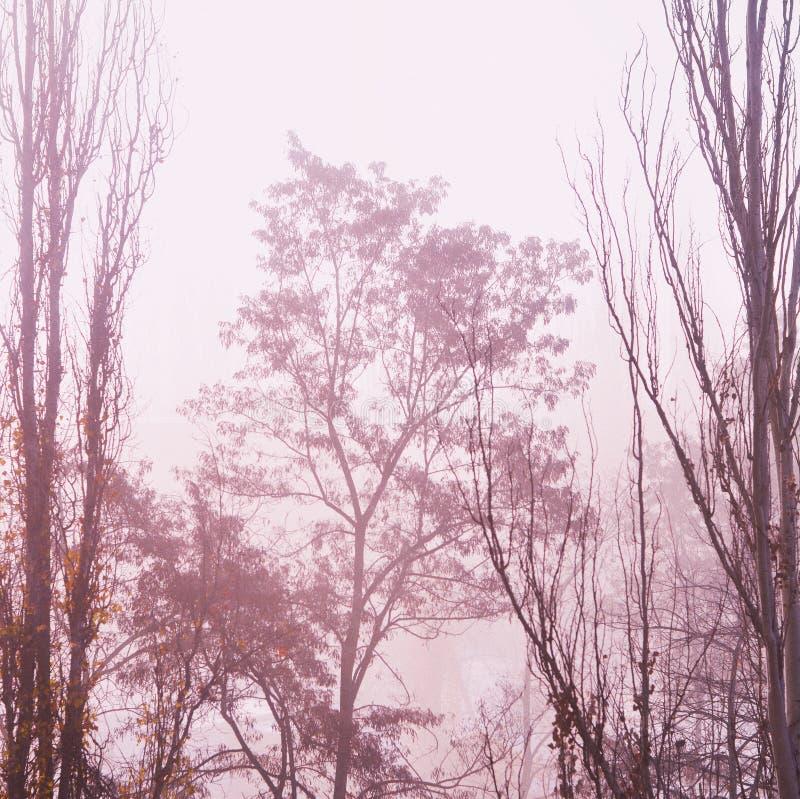 Tiro de la gama larga del abedul y de árboles en un bosque en invierno con el cielo gris en el fondo foto de archivo libre de regalías