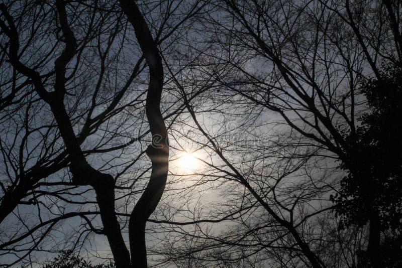 Tiro de la silueta de los árboles fotografía de archivo libre de regalías