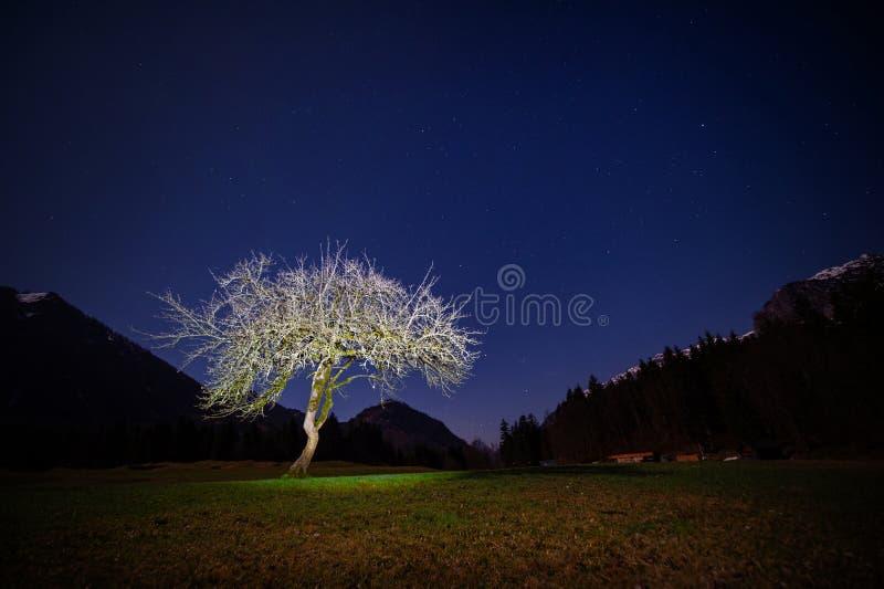 Tiro de uma paisagem alpina - árvore da noite iluminada por uma lâmpada de bolso imagens de stock