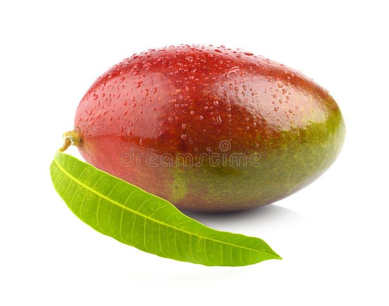 Tiro del estudio de un mango entero con la hoja aislada imagen de archivo