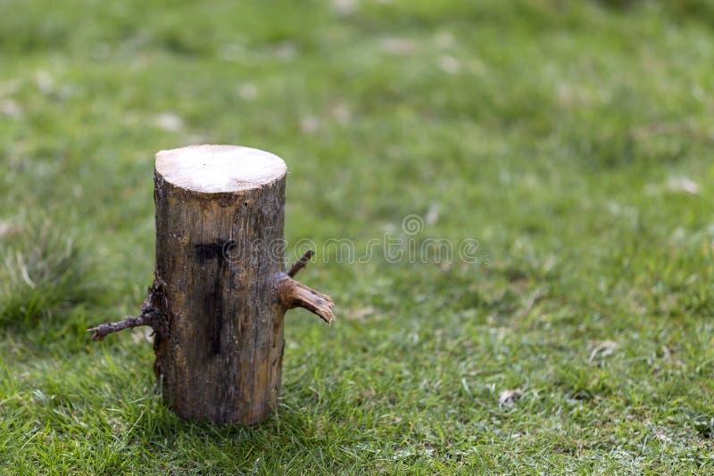 Tiro del primer, tocón de árbol aislado al aire libre en el summ soleado herboso fotografía de archivo libre de regalías