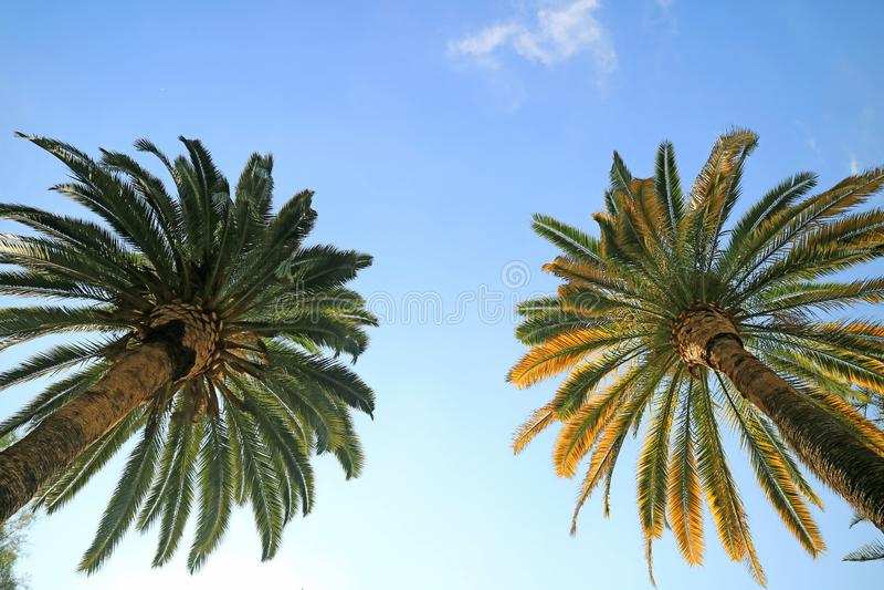 Tiro do baixo ângulo de um par de palmeiras em Cerro Santa Lucia Park, Santiago, o Chile fotos de stock royalty free