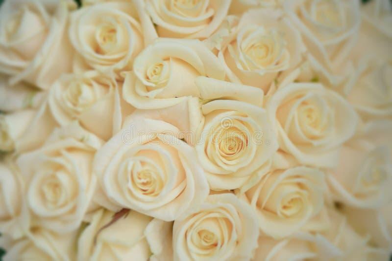 Tiro do close-up das rosas do marfim bonito grande, arranjo floral para o casamento ou celebrações fotografia de stock