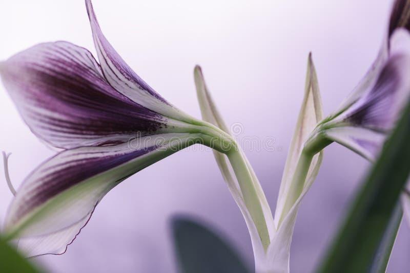 Tiro do macro da flor foto de stock royalty free