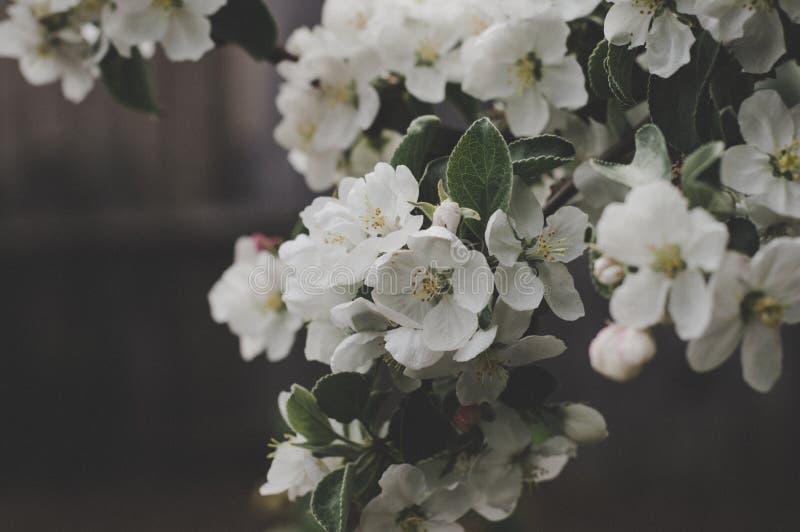Tiro do macro das flores brancas imagem de stock royalty free