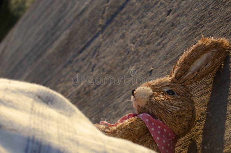 Tiro e mare capi svegli del coniglietto di pasqua nei precedenti fotografia stock libera da diritti