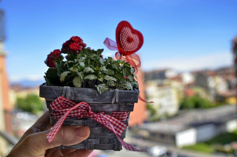 Tiro en primer en una flor peque?a y bonita fotografía de archivo